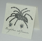 Spider Natural History Earrings - silver