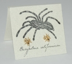 Spider Natural History Earrings - gold