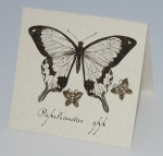 Butterfly Marcasite Natural History Earrings
