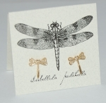 Dragonfly Natural History Earrings - gold